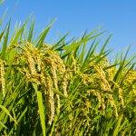 В России создано уникальное удобрение, на четверть увеличивающее урожаи