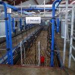 На Алтае закончено строительство нового животноводческого комплекса