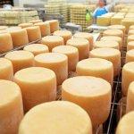Третья часть сыров в России фальсификат