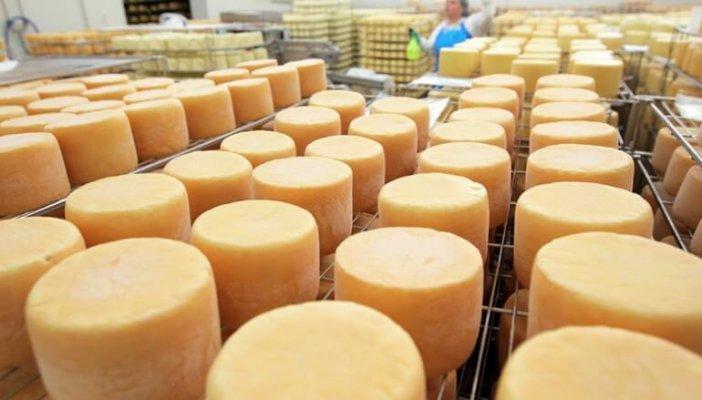 В Подмосковье планирую создать сырный кластер