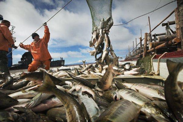 Налоговая хартия в рыбоводстве исклает участие на рынке перепукщиков