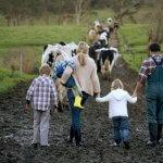 Краснодарские семейные фермы могут рассчитывать на большие гранты