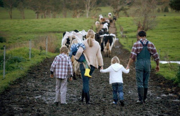 КУбанские фермерф могут рассчитывать га ганты в 30 миллионов рублей