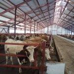 ООО «Самородок» ставят в пример аграриям Нижегородской области