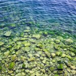Байкальские водоросли нашли свое применение в растениеводстве