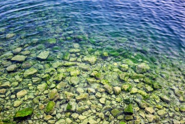 Байкальские водоросли можно использовать как удобрение