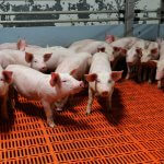 Жители Подмосковья протестуют против строительства свиноводческого комплекса