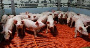 Жители ПОдмосковья против новых животноводческих комплексов