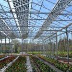 Солнечные панели на теплицах способствуют увеличению урожайности  растений