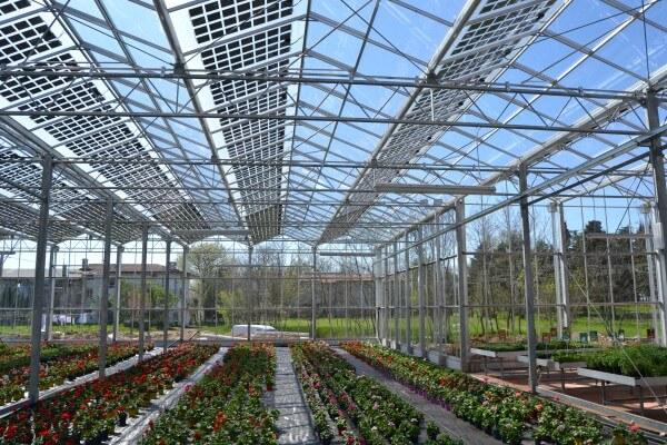 Изобретены солнечные панели для теплиц