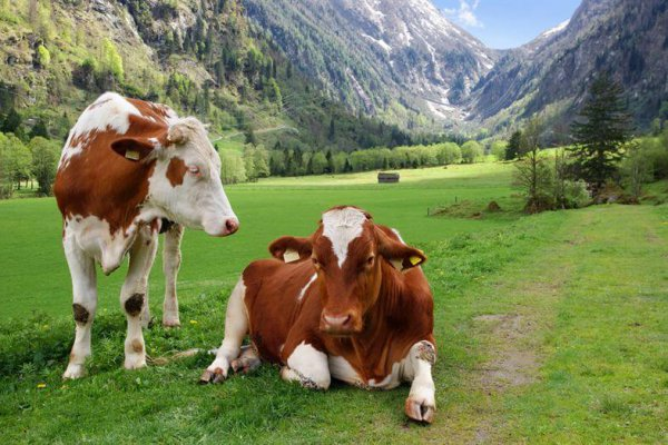 Краснодарские животноовды намерены осваивать предгорные пастбища