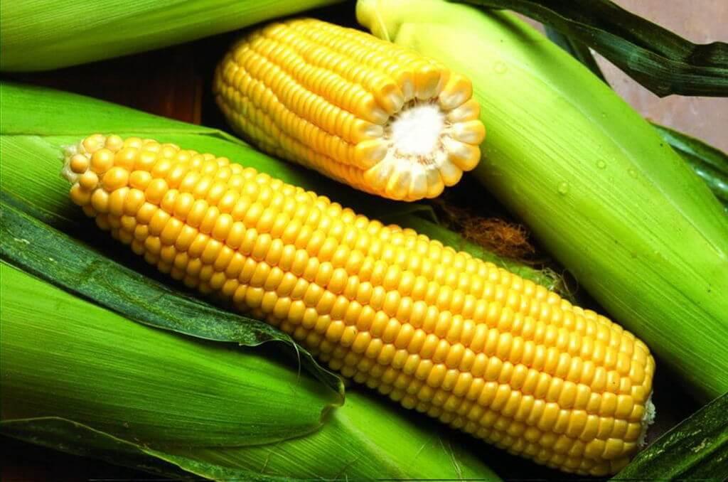 Деликатесный сорт сахарной кукурузы
