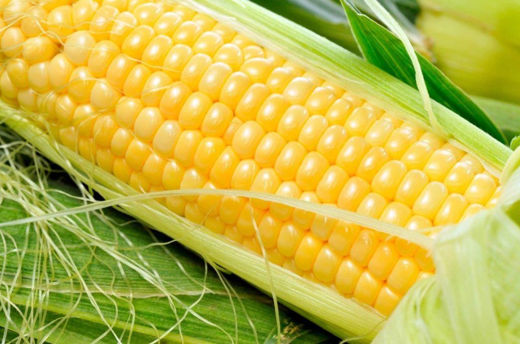 Кукуруза сахарная сорт Санрайз