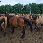Фермер из Красноярского края активно внедряет инновационные технологии