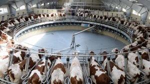 В РОссии будут создано несколько молочных кластеров с использованием израильского оборудования