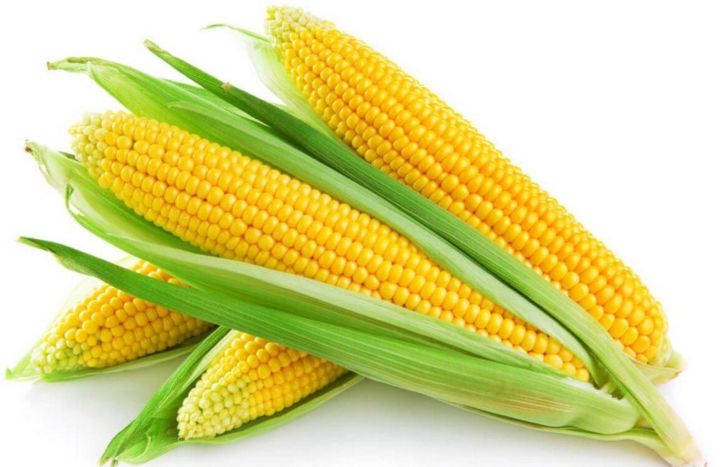 Сахарная кукуруза Челенджер