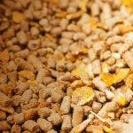 Новосибирский фермер кормит своих животных попкорном из пшеницы