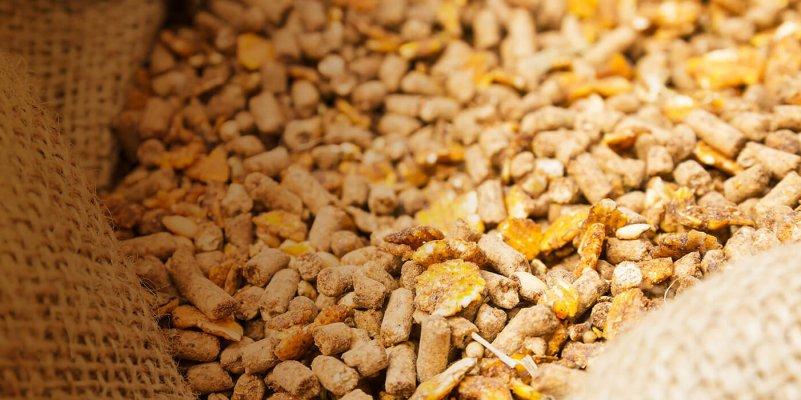 Попкорн из пшеницы для сельскохозяйственных животных