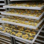 Фруктовые чипсы студента — предпринимателя