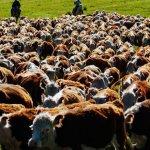 В Алапаевском районе Свердловской области подтвердился туберкулез коров