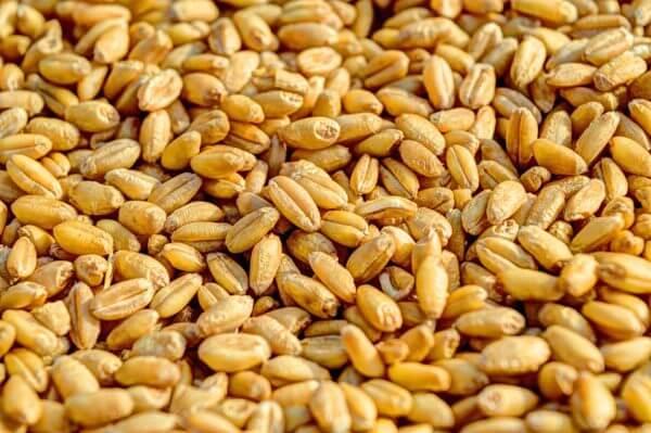 Крым впервые получил возможность экспортировать свое зерно