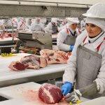Сельскохозяйственный кооператив «Каргалинский» запустил убойный цех