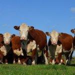 В Нижегородской области появился новый животноводческий комплекс