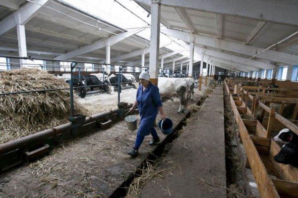 В Уссуриске на семейной ферме планируют строительство перерабатывающего завода