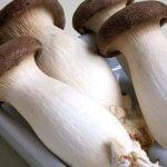 В Московской области появятся фермы по выращиванию грибов