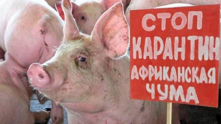 В Тимашевском районе Краснодарского края введен карантин по АЧС