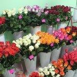 Букеты роз с опасным сюрпризом