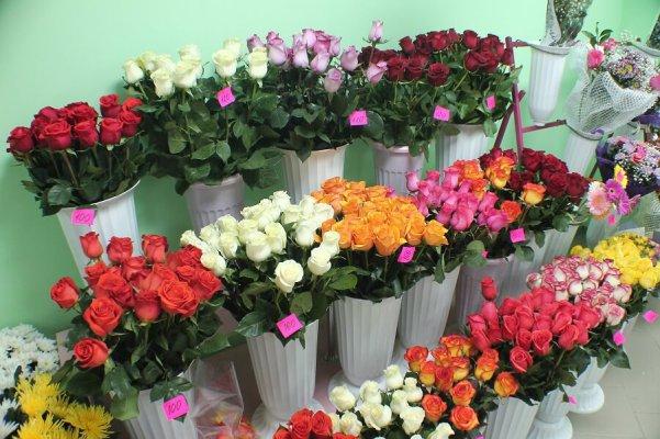 На импортных розах нашли калифорнийского трипса