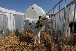 В Воронежской области введен в строй новый молочный комплекс