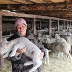 В Бурятии создается центр племенного животноводства