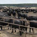 В республике Татарстан объекты животноводства строят итальянцы