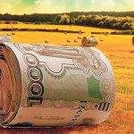 Российские сельхозпроизводители не собираются заключать договоры агрострахования