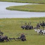 Депутаты Чукотки предлагают расширить программу «Дальневосточный гектар»