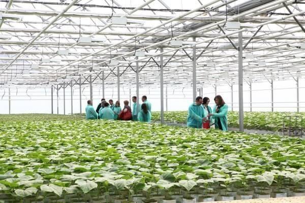 На юге Росси растет строительство тепличных комплексов