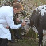 В Свердловской области зафиксирован очаг туберкулеза КРС