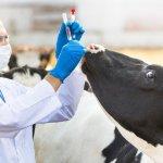 Ветеринарную службу России ждут большие перемены