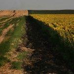 Антимонопольная служба контролирует скупку сельскохозяйственных земель