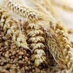 В Крыму выявили зерно с превышением пестицидов