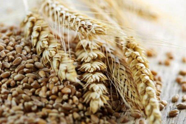 ВКрыму изъято более 700 тонн опасного для здоровья зерна