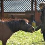 В Алтайском крае создали цент аграрного туризма