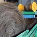 В России восстанавливают льняное производство