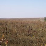 Финансирование восстановления заброшенных земель будет увеличено
