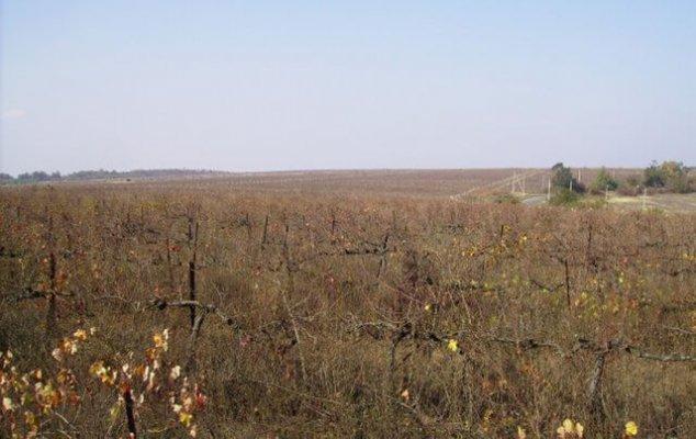 На восстановление заброшенных земель увеличивают финансирование