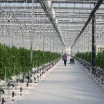 В Кемеровской области создан новый тепличный комплекс