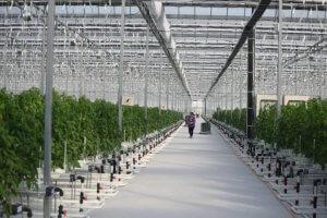 В Кемеровской области начали работать новые теплицы