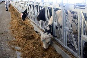 В Красноярском крае строят новые молочные комплексы